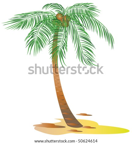 Palm trees.  Raster version of vector.
