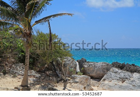 palm trees, rocks and turquoise sea