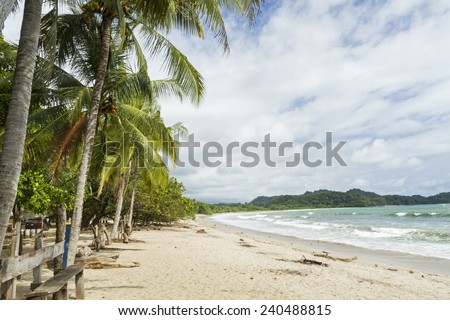 Palm trees shade the beach at quiet Playa Garza in Nosara, Costa Rica