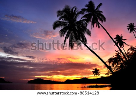 Palm Trees Silhouette At Sunset - stock photo