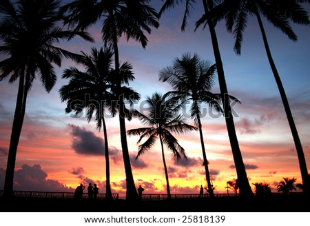 palm trees silhouette at sunset in Sri Lanka - stock photo