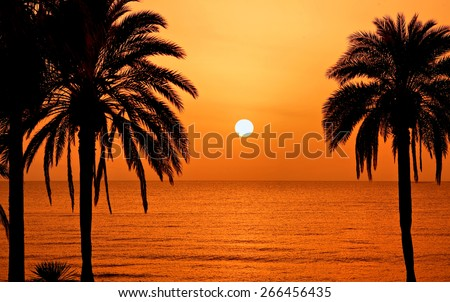 Palm trees silhouette at sunset, Tenerife, Spain - stock photo