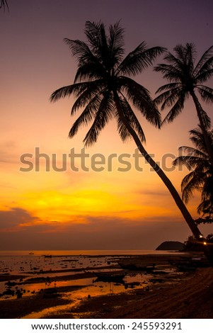 palm trees silhouette on orange sunset tropical beach. Tropical island Koh Samui. Thailand - stock photo