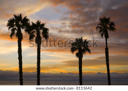 Palm Trees Silhouetted against a Beautiful Sunset - stock photo