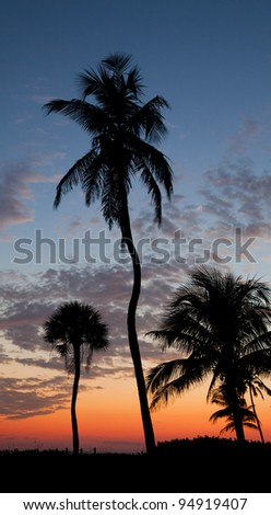 Palm Trees Silhouetted against an evening sky - stock photo