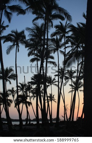 Palm trees silhouetted at peaceful sunset. - stock photo