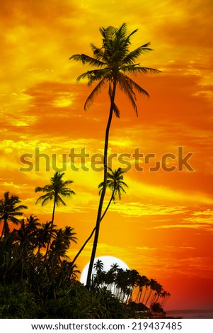 Palm trees silhouetted on sunset background - stock photo