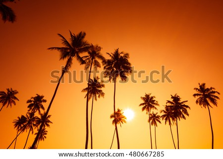 Palm trees silhouettes on tropical island beach at summer warm sunset time with sun and vivid orange sky background