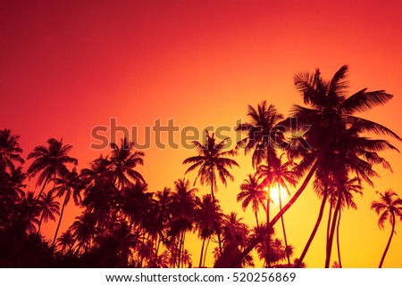Palm trees silhouettes on tropical ocean beach at summer warm vivid sunset time with clear sky and sun circle with rays