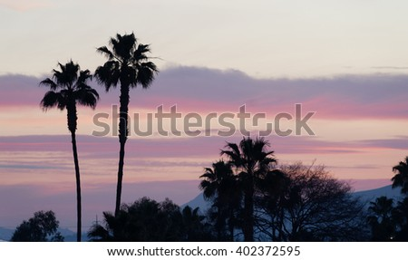 Palm trees stand against the sunset in California - stock photo