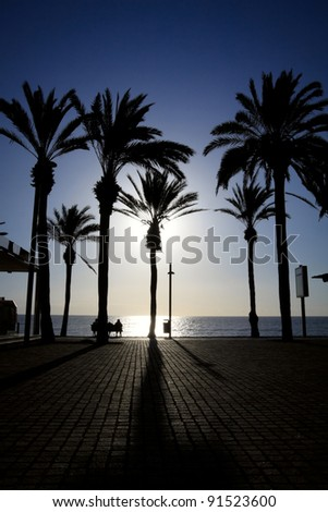 Palm trees standing on the ocean seafront in a low sun light. Las Americas, Tenerife.