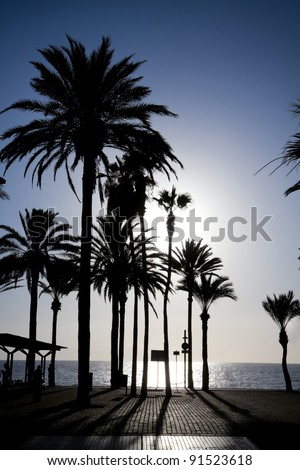 Palm trees standing on the ocean seafront in a low sun light. Las Americas, Tenerife. - stock photo