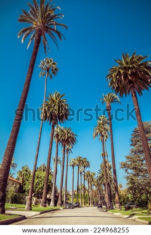 Palm trees street in Beverly Hills, Los Angeles - stock photo