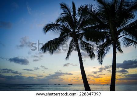 Palm trees sunset - stock photo