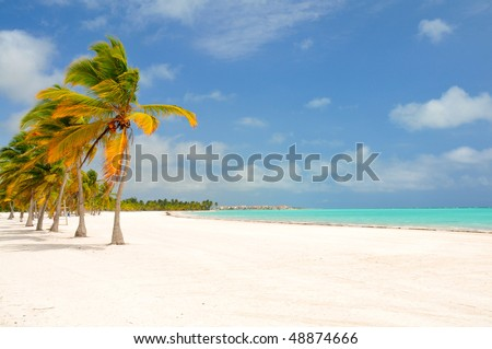 Palm Trees Swaying At a Beach - stock photo