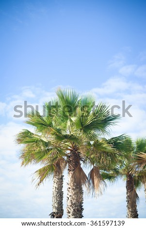 Palm trees, travel, summer, vacation and tropical beach concept on blue sky and white clouds background - stock photo