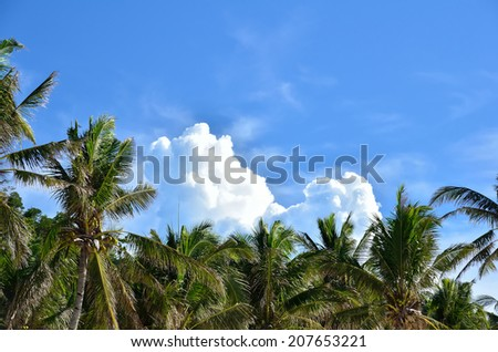 Palm trees under a blue sky