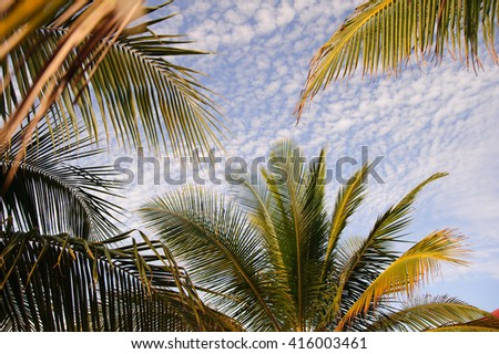 palm trees under the sky - stock photo