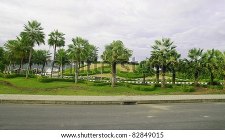 Palm trees view - stock photo