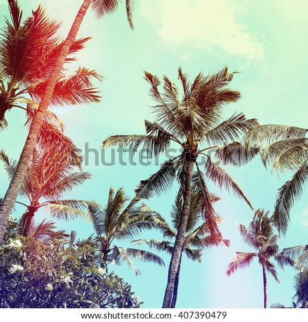 palm trees, vintage effect - stock photo