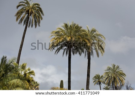 Palm Trees with a Sky Background