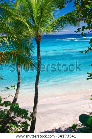 palm trees with turquoise waters and sandy beach