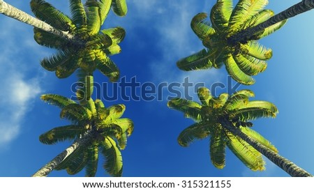 Palm treetops against blue sunny sky background - stock photo