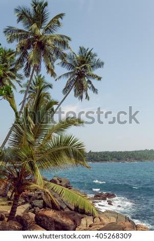 palm tropical beach - stock photo