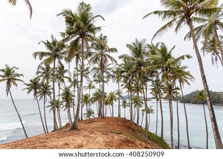Palm tropical beach. Mirissa Beach. Sri Lanka. - stock photo