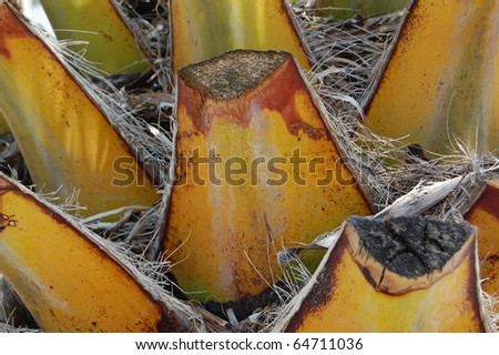 palm trunk - stock photo