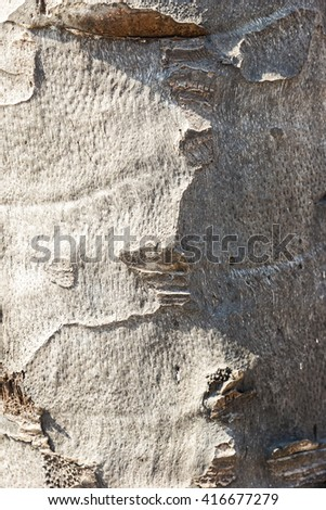 Palm trunk background