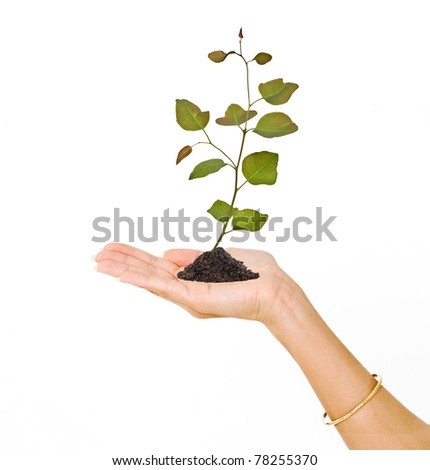 Palm with a sapling - stock photo