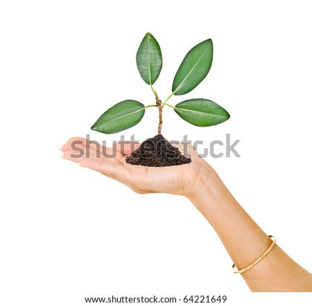 Palm with a tree seedling - stock photo