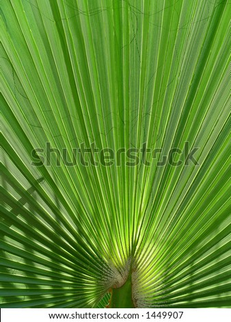 palm with shadow - stock photo