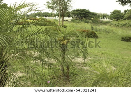 Palm with thorny spikes Blossoming and fruitful