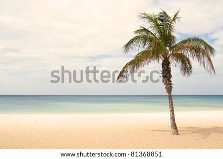 Palme - stock photo