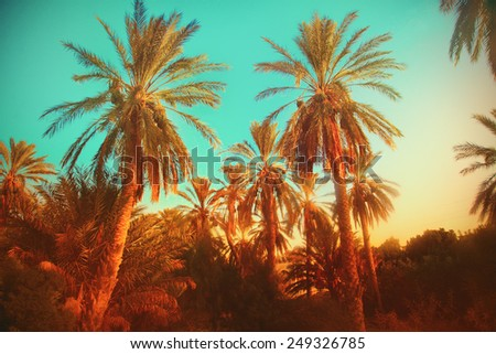 Palms - stock photo