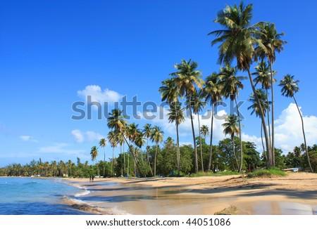 Palms - stock photo