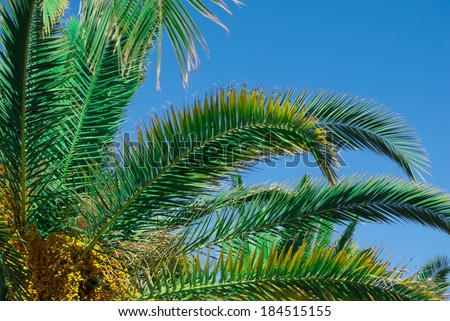 palms against sky