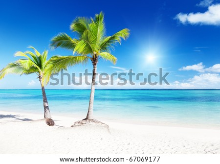 palms and beach - stock photo
