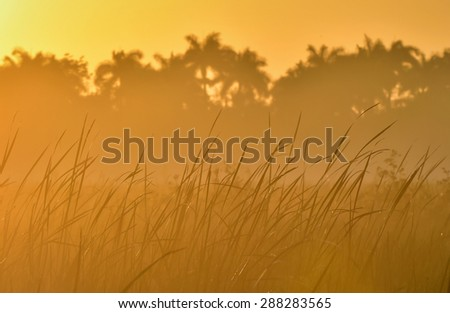 Palms and plants in tropic on sunrise. Zapata. Cuba - stock photo