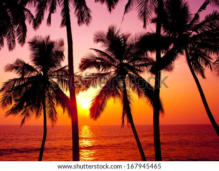 Palms and sun, tropical sunset taken in Goa, India  - stock photo