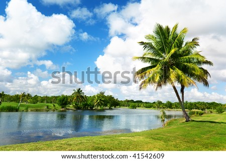 palms and tropical lake - stock photo