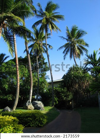 Palms at resort (Fiji, Nadi)