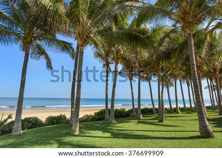 Palms at the beach in Mancora, Piura, Peru. - stock photo