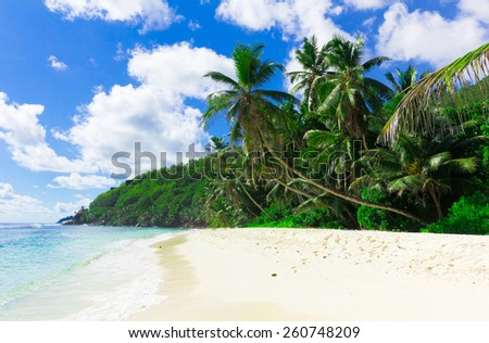 Palms Bay Shore  - stock photo