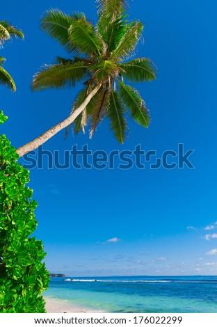 Palms Dream Jungle  - stock photo