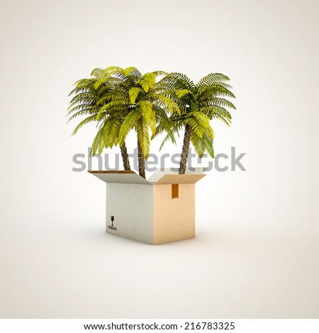 palms in a box isolated on white background - stock photo