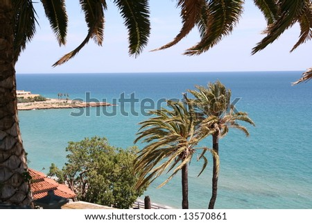 Palms in front of the sea and blue sky, with palm in foreground. - stock photo