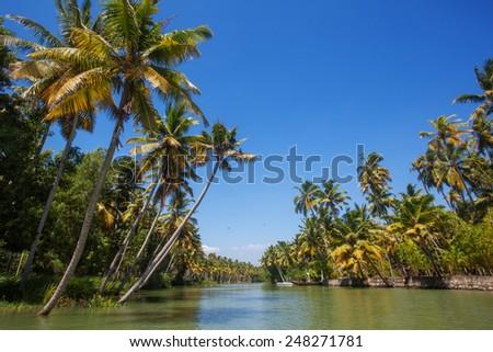 Palms in Kerala - stock photo